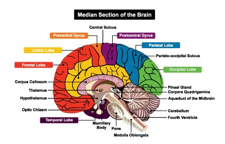 Brain Rehabilitation - Vitae Equilibre   Finding Balance